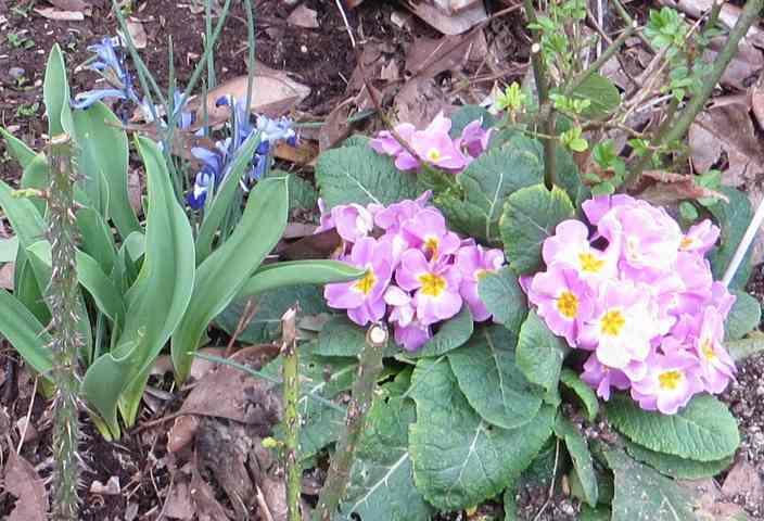Annonce de printemps !!! - Page 3 Img_5538
