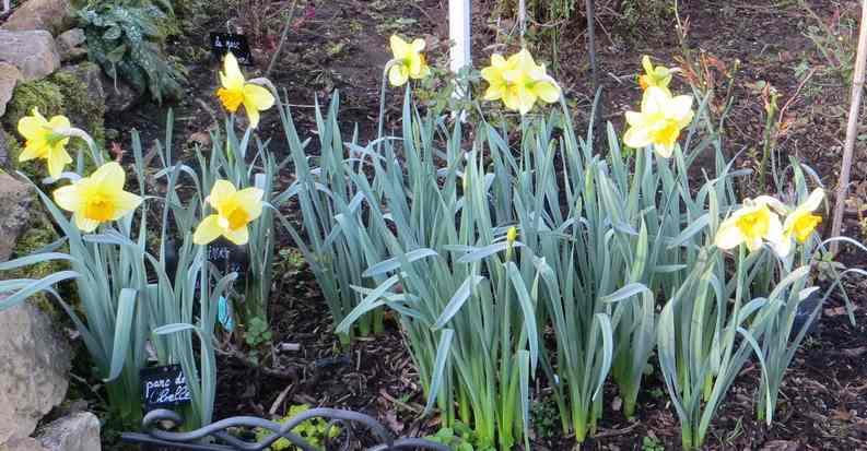 Annonce de printemps !!! - Page 3 Img_5542