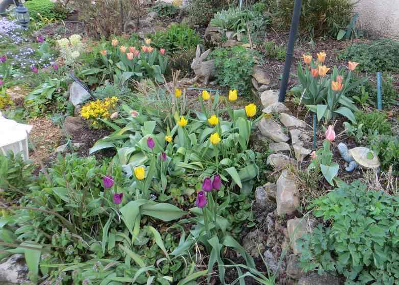Tulipes. - Page 3 Img_5567