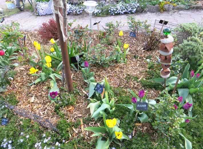 Tulipes. - Page 3 Img_5569