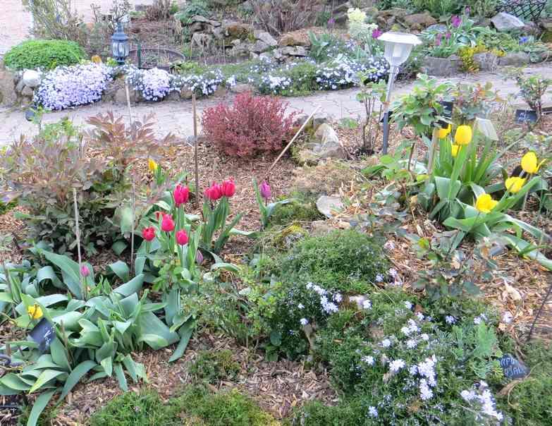 Tulipes. - Page 3 Img_5571