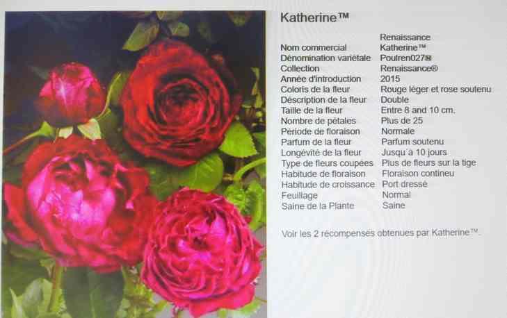 rosier renaissance Katherine Img_5629