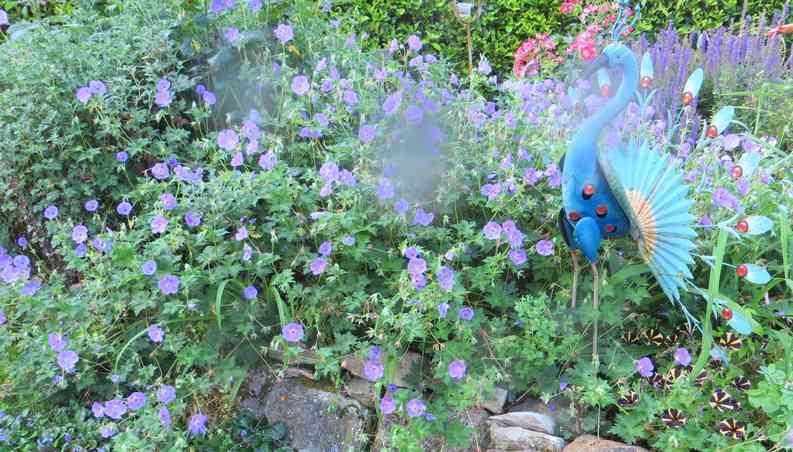 geranium vivace - Page 10 Img_5839
