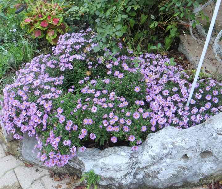 aster Img_5856