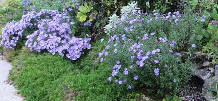 aster Img_5857