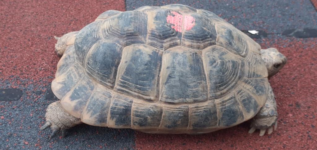 xexage seconde tortue 20201015
