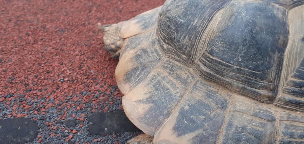 xexage seconde tortue 20201016