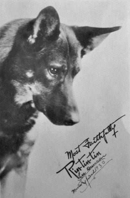 Le saviez-vous : Rintintin chien de guerre. Promot10