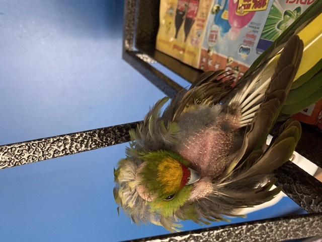 Quel est le souci de mon oiseau A1441a10