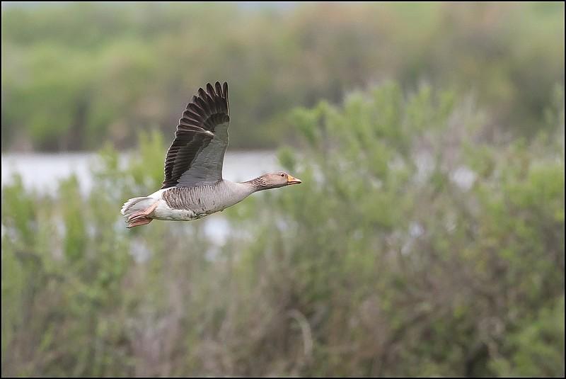[33 - Gironde] Le Teich (avril-mai 2016) Img_0110