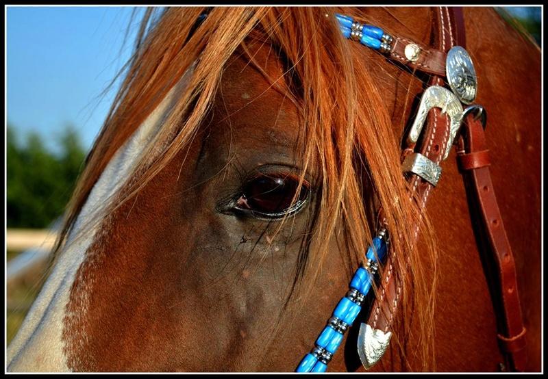 Bridon western cuir/perle 11754210