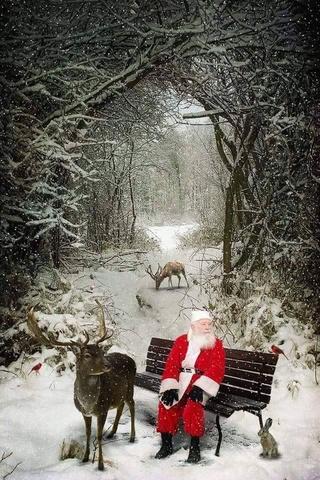 Noël 2016 15326511