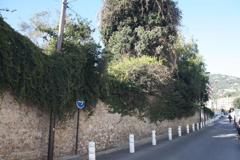 Eucalyptus calmadulensis Bord_d10
