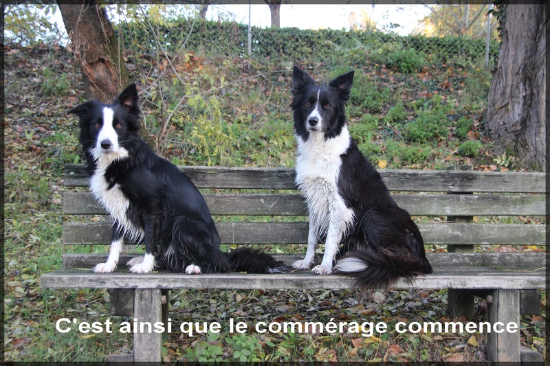 Mes chiennes Img_7110
