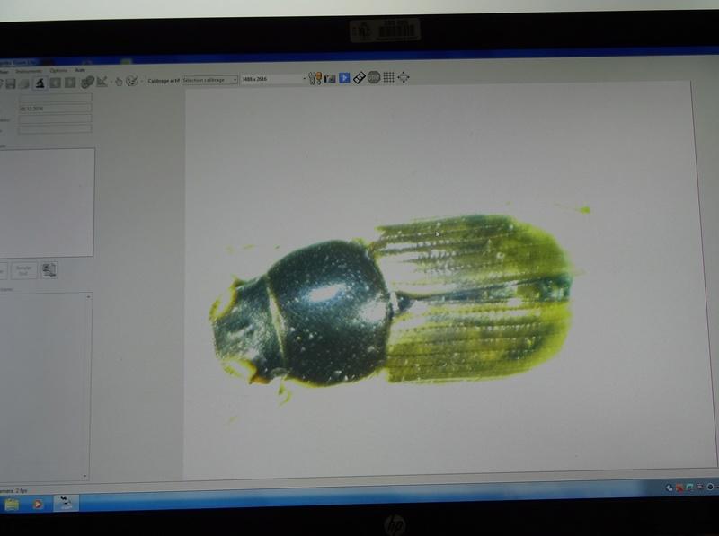 Matériel prinobius Dsc01812