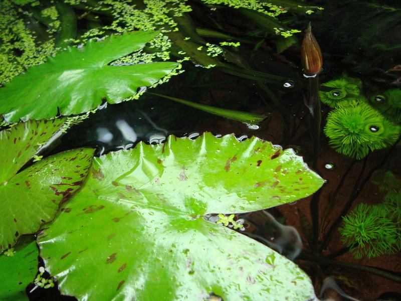 Mes plantes et fleurs Dsc04712