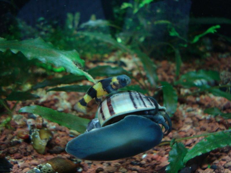 Ce post pour des photos marrantes de vos aquariums Dsc05810