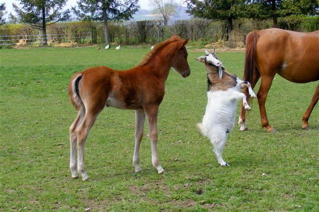 """Concours photos """"les compagnons de vos chevaux"""" gagnant Joël Dscf4710"""