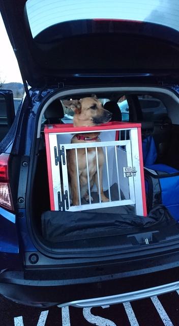 Transport en voiture des chiens et chats - Page 8 Dsc_0012