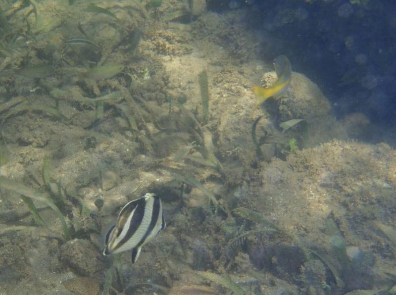 Lipette : Voyage en Guadeloupe 1110