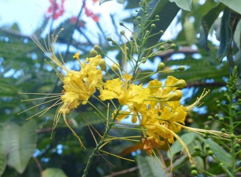 Lipette : Voyage en Guadeloupe 15a10