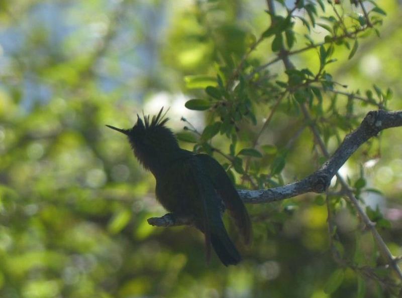 Lipette : Voyage en Guadeloupe 5a10