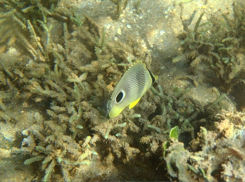 Lipette : Voyage en Guadeloupe 610