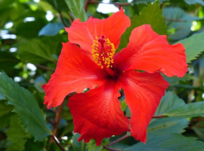 Lipette : Voyage en Guadeloupe 6610