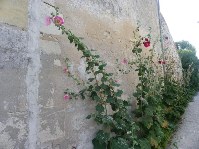 Talmont sur Gironde Imgp0614