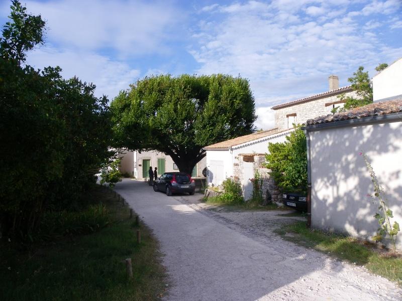 Talmont sur Gironde Imgp0619