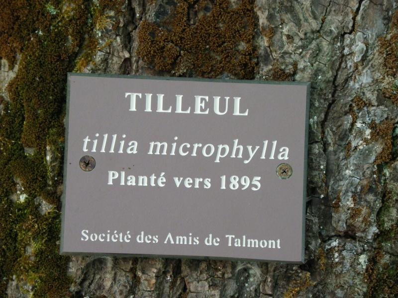 Talmont sur Gironde Imgp0621