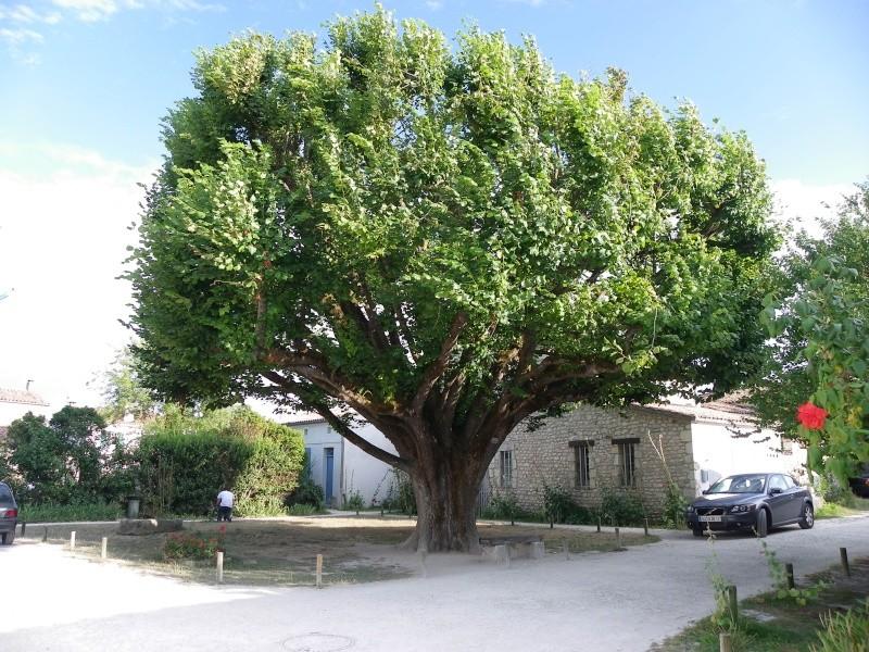 Talmont sur Gironde Imgp0622