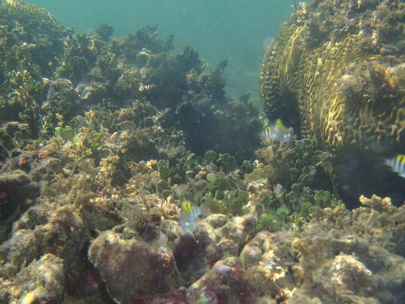 Lipette : Voyage en Guadeloupe P1010118