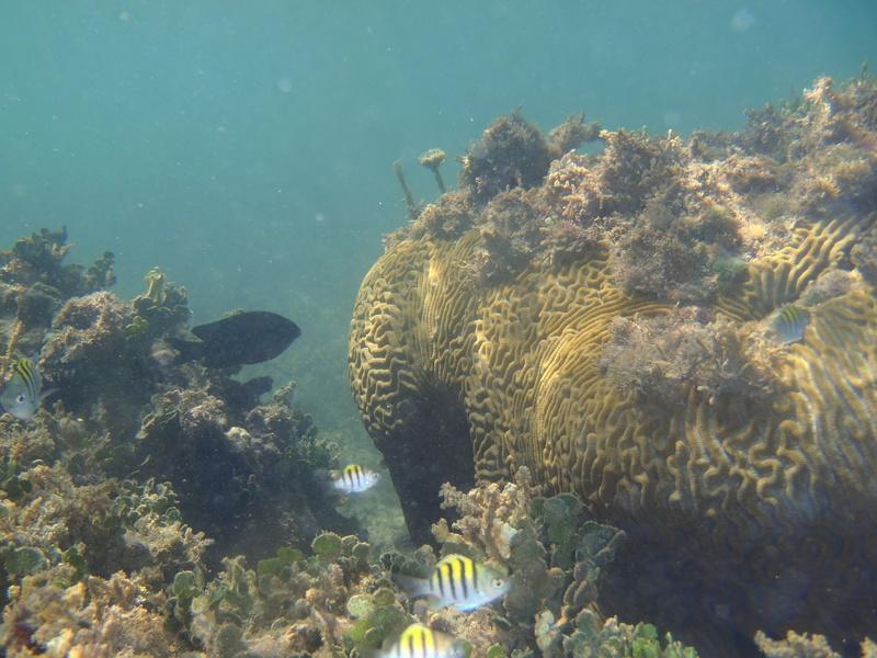 Lipette : Voyage en Guadeloupe P1010121