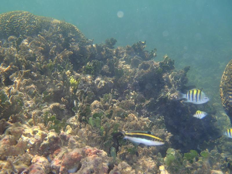 Lipette : Voyage en Guadeloupe P1010122