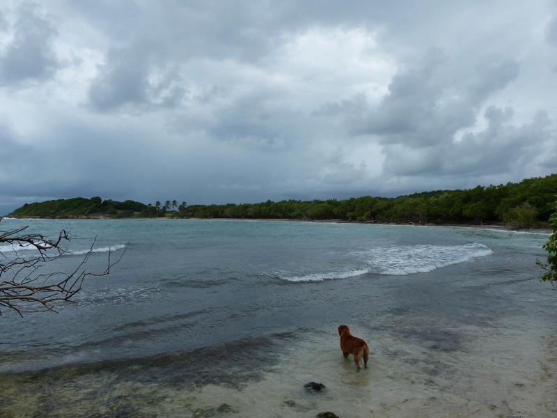 Lipette : Voyage en Guadeloupe P1450417