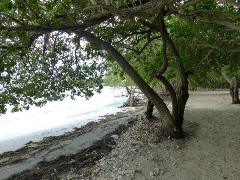 Lipette : Voyage en Guadeloupe P1450420