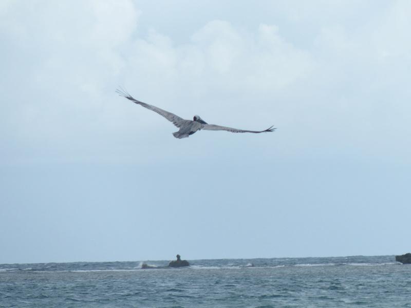 Lipette : Voyage en Guadeloupe P1450425