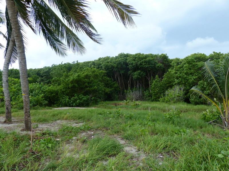 Lipette : Voyage en Guadeloupe P1450427