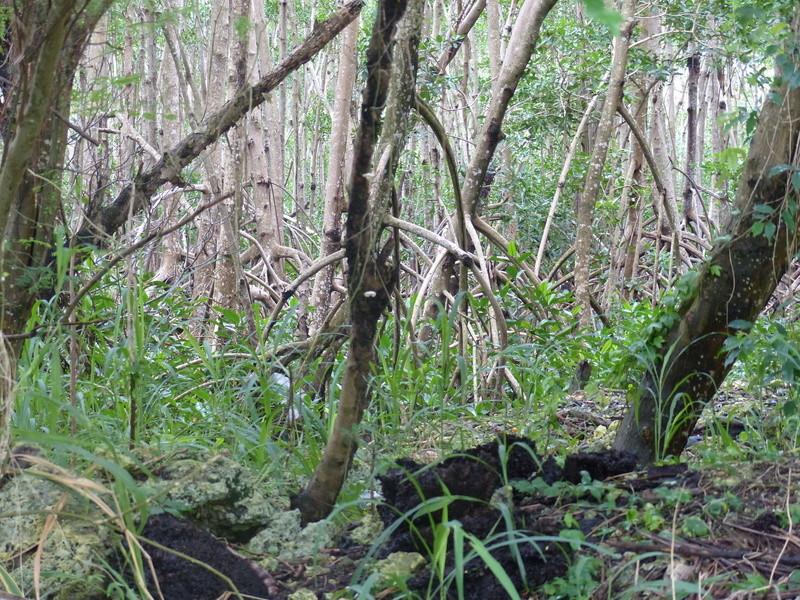 Lipette : Voyage en Guadeloupe P1450510