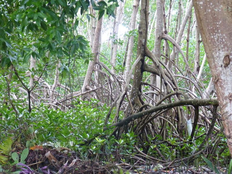 Lipette : Voyage en Guadeloupe P1450512