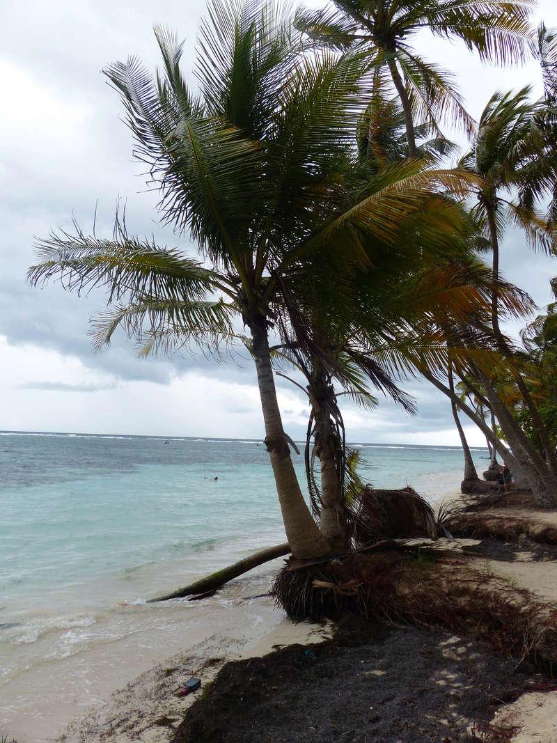 Lipette : Voyage en Guadeloupe P1450520