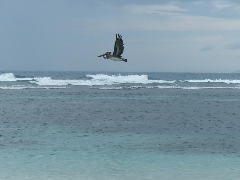 Lipette : Voyage en Guadeloupe P1450527