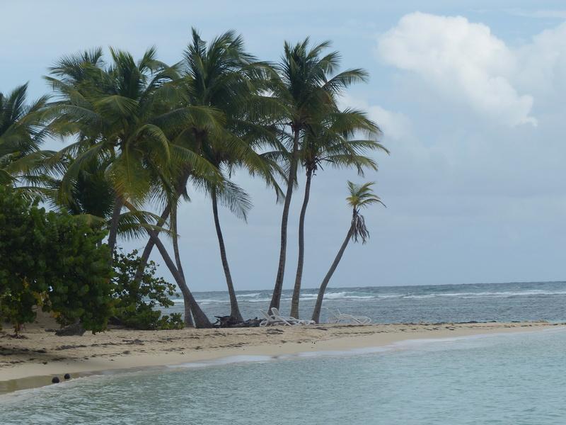 Lipette : Voyage en Guadeloupe P1450530