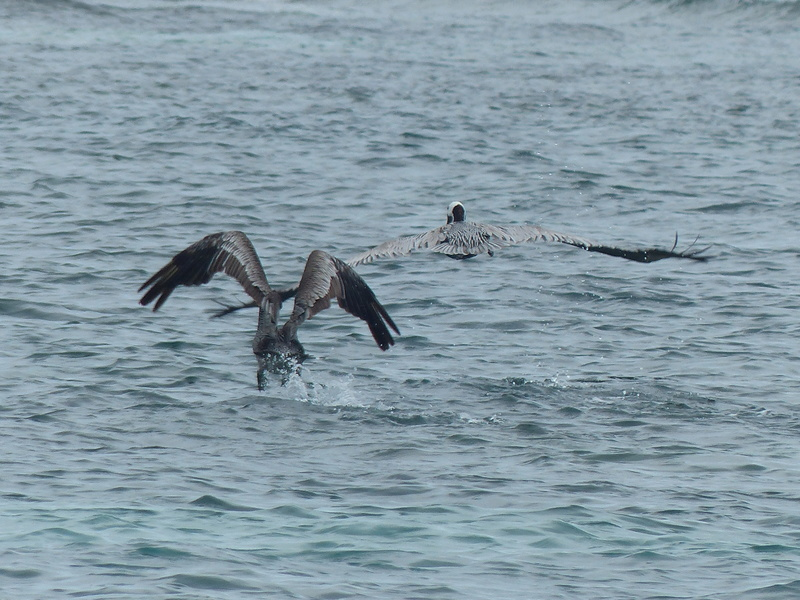 Lipette : Voyage en Guadeloupe P1450531