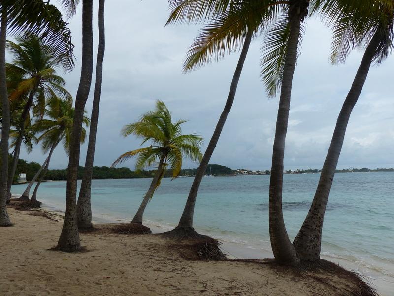 Lipette : Voyage en Guadeloupe P1450534