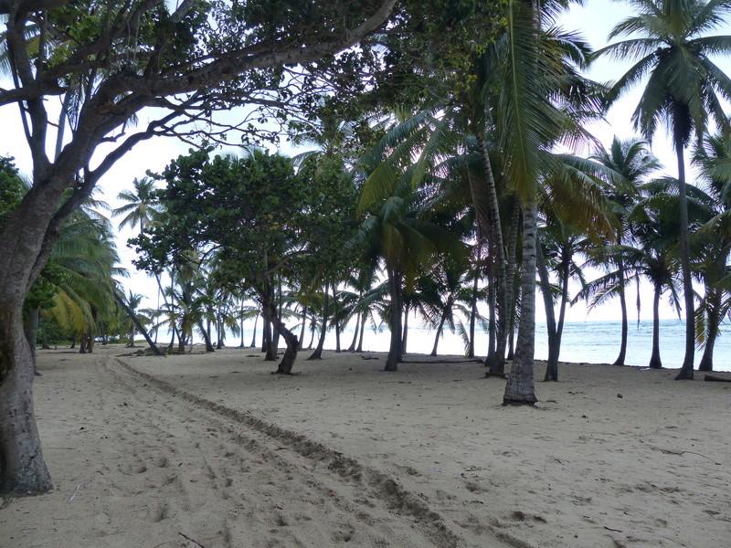 Lipette : Voyage en Guadeloupe P1450543