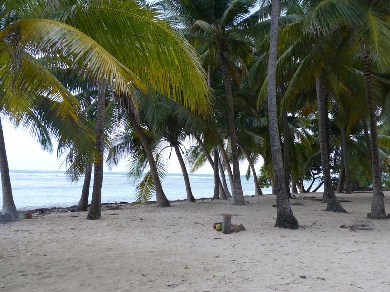 Lipette : Voyage en Guadeloupe P1450544