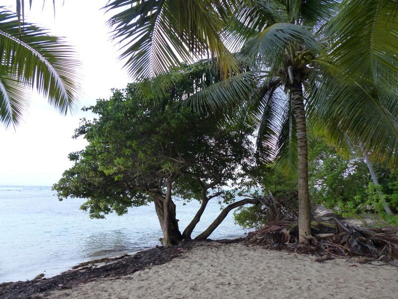 Lipette : Voyage en Guadeloupe P1450547