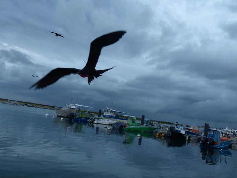 Lipette : Voyage en Guadeloupe P1450554